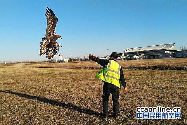 """伊宁机场不领薪水的""""员工""""为飞行安全保驾护航"""