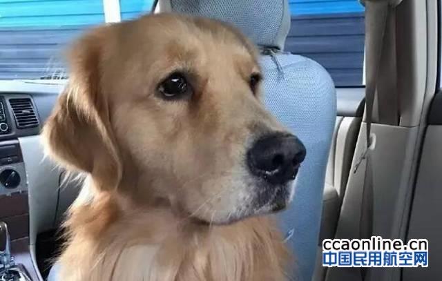 托运金毛犬死亡,东航:按每公斤100元赔偿