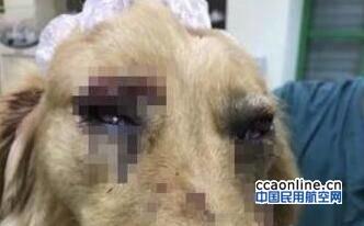 宠物犬托运途中闯入机场禁区 被打成重伤狗主人质疑
